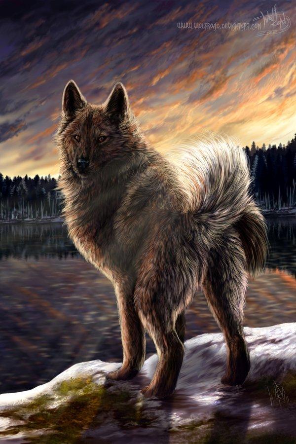 В мире волков wolfroad часть 3