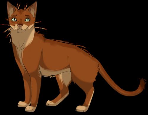 кисточка картинки коты воители
