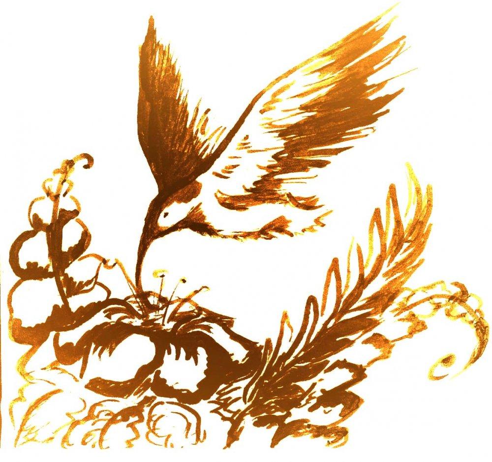 эскизы колибри: