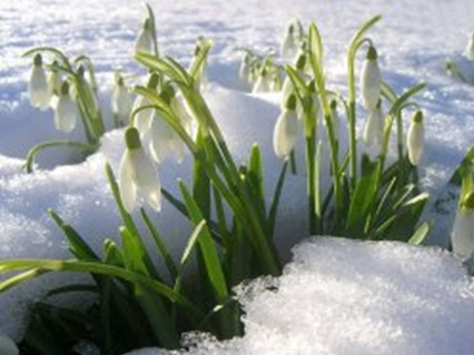 Картинки весна - d1e3
