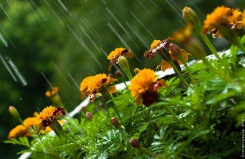 Обряды вызова дождя и обрядовое купание в обычаях зарубежной Европы.