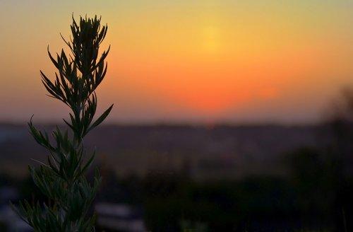 Магия растений. Полынь - мать всех трав