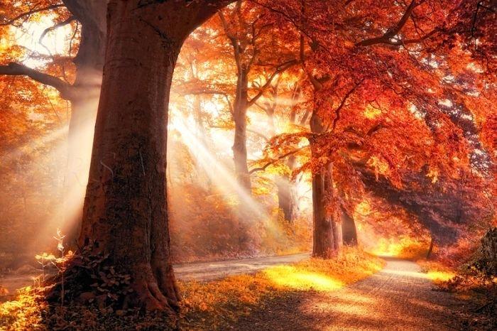 Картинки фантастика волшебный лес зимой