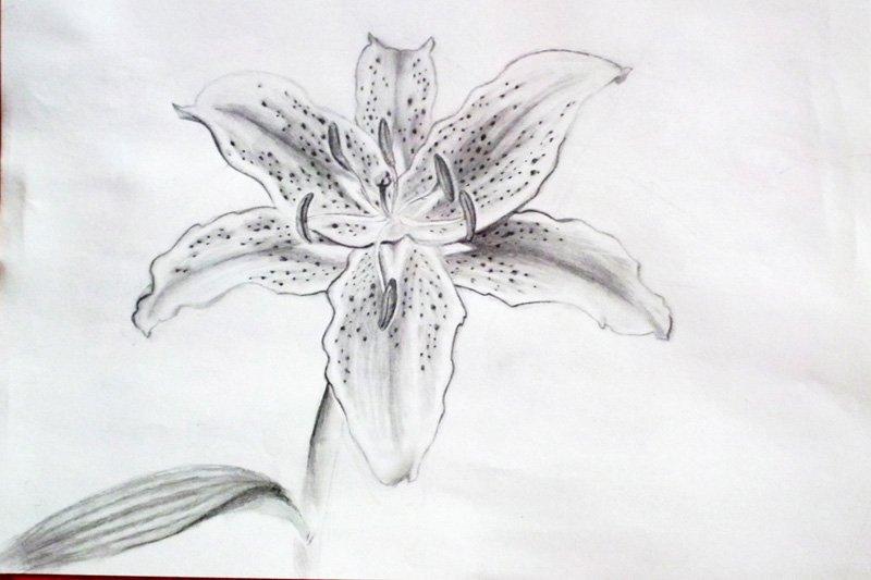 техника рисунка карандашом скачать торрент: