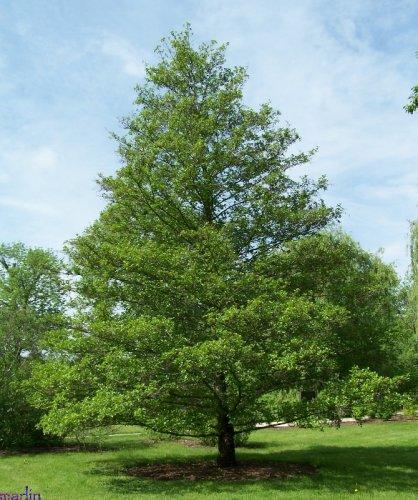виды деревьев фото
