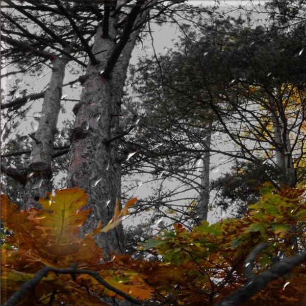 http://dreamworlds.ru/uploads/posts/2012-11/thumbs/1352297857_have_you_ever_seen_the_rain_by_anaphenix-d4izd7q.jpg