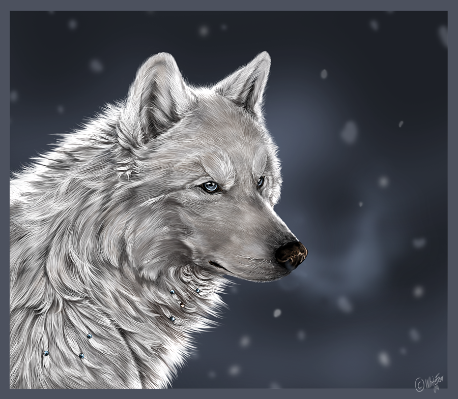 Снежные волки и собаки by whitefear ruhje