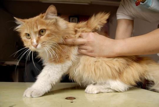 Необычные кошки - Форум Zoo.kZ